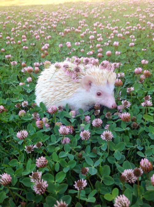 Flower Flowers Nature Hedgehog Hedgehogs Grass Flower
