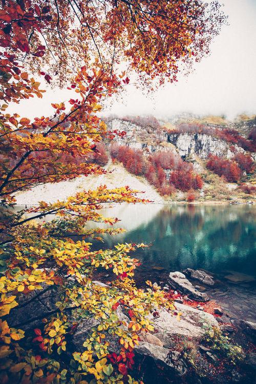 Iphone 6 Wallpaper Fall Leaves Art Landscape Fall Nature Autumn Hiking Artists On Tumblr