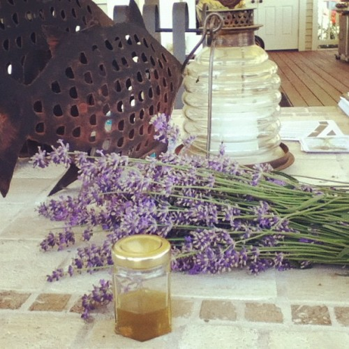 We distilled this lavender oil today. (Taken with Instagram)