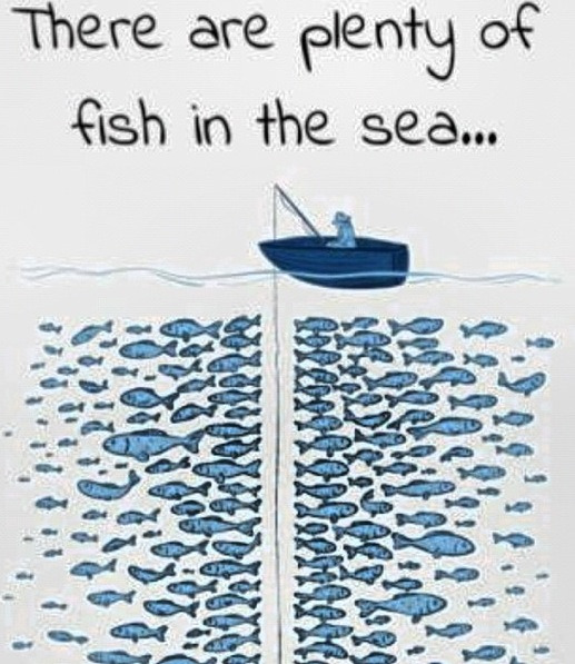 Image result for plenty of fish in the sea