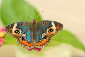 What do soap bubbles and butterflies have in common?
