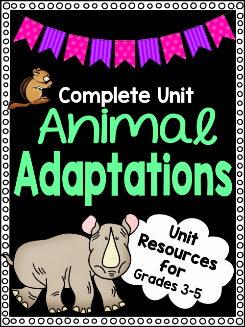 small resolution of Animal Adaptations Worksheet Unit Plan for Teachers