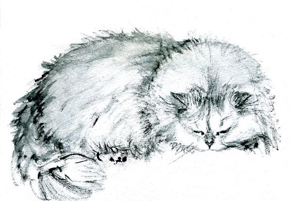 Шамшиева татьяна,спящая кошечка