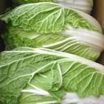 金スマ|春白菜の肉詰めの作り方(秋野陽子レシピ)