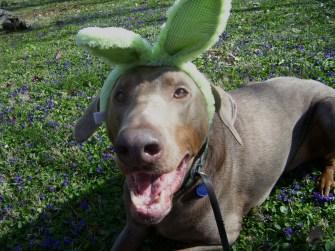 Jack in Bunny ears