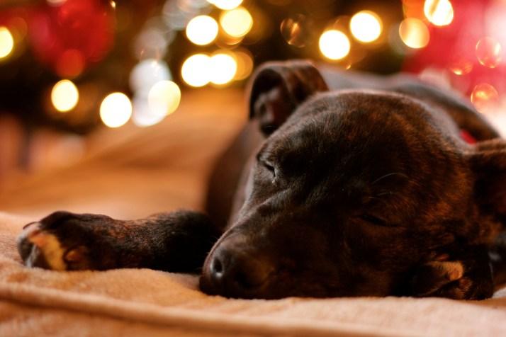 Duke Sleeping