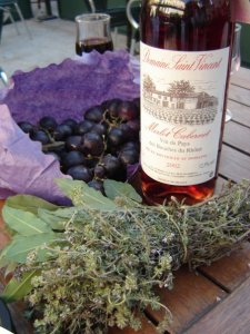 Wine and Grapes in France