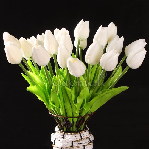 19 Interesting Tulip Facts