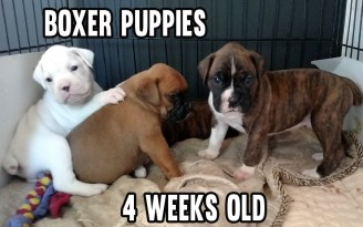 How to raise newborn puppy and kennel training puppy to poop and pee outside
