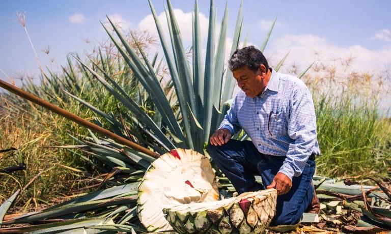Santiago Gonzalez 3 amigos tequila h