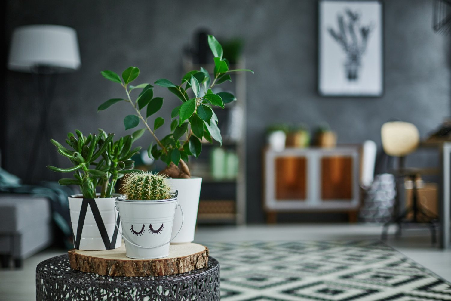 Plants That Will Help Keep Your House Cool  Simplemost