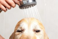 Home Design's New Trend? Dedicated Dog Showers - Simplemost