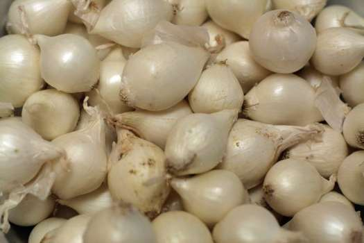 pearl onions photo