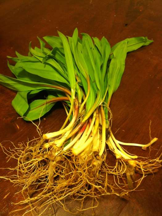ramps vegetables photo