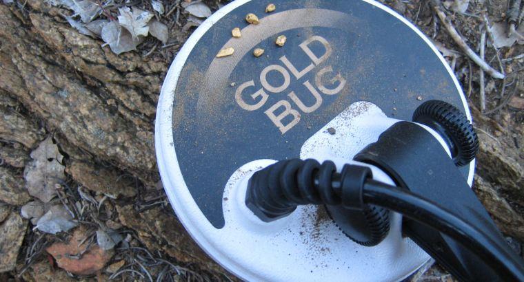 GOLD BUG 4