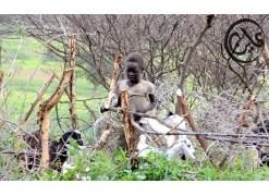 هجوم يستهدف رعاة ماشية في تيس
