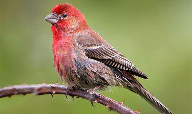 Znalezione obrazy dla zapytania bird