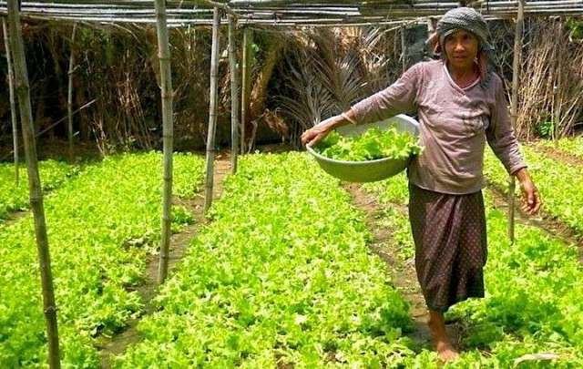 Image result for Empowering farmers to grow sustainably