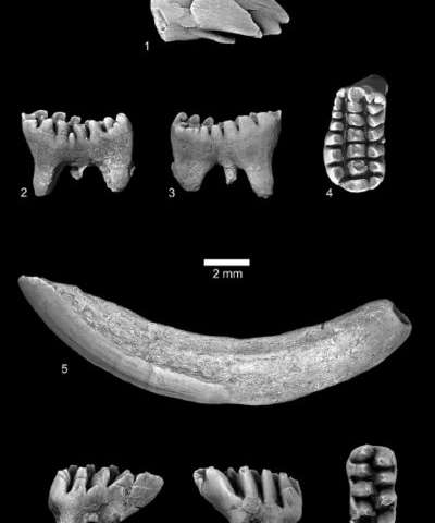 Los fósiles de 56 millones de años complican las teorías arraigadas sobre el tamaño del cuerpo de los mamíferos