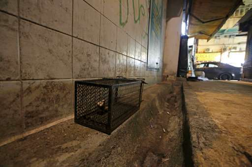 Hong Kong finds humans contracted hepatitis carried in rats