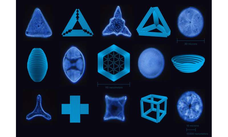 Los arquitectos unicelulares inspiran nuevas nanotecnologías
