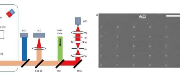 Nanoscale magnetic images of ferritin in a single cell