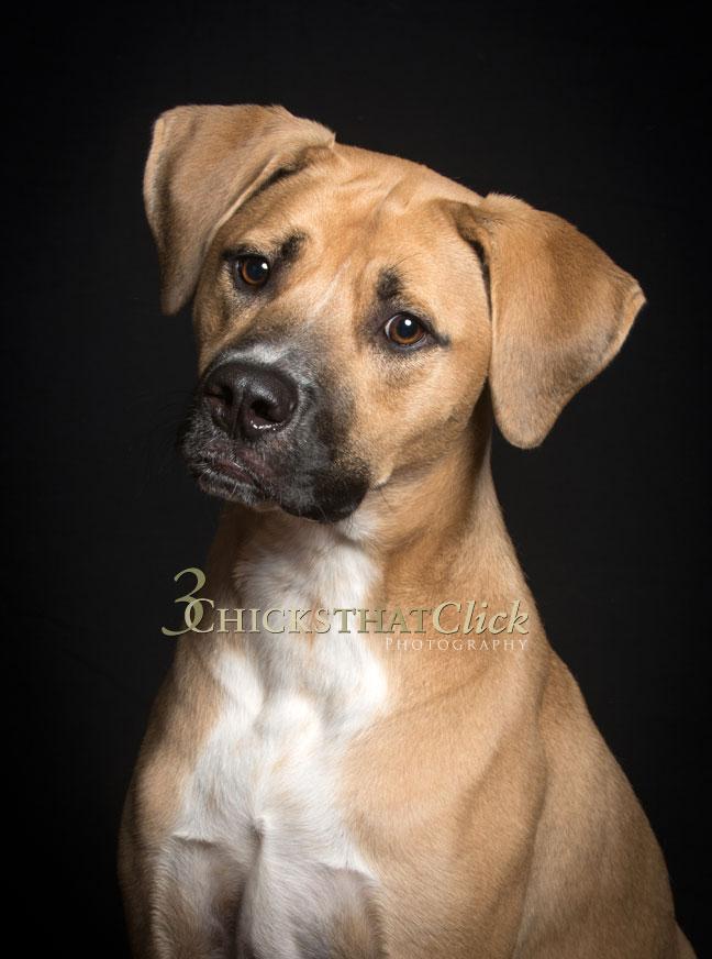 Photo of Buddy the dog