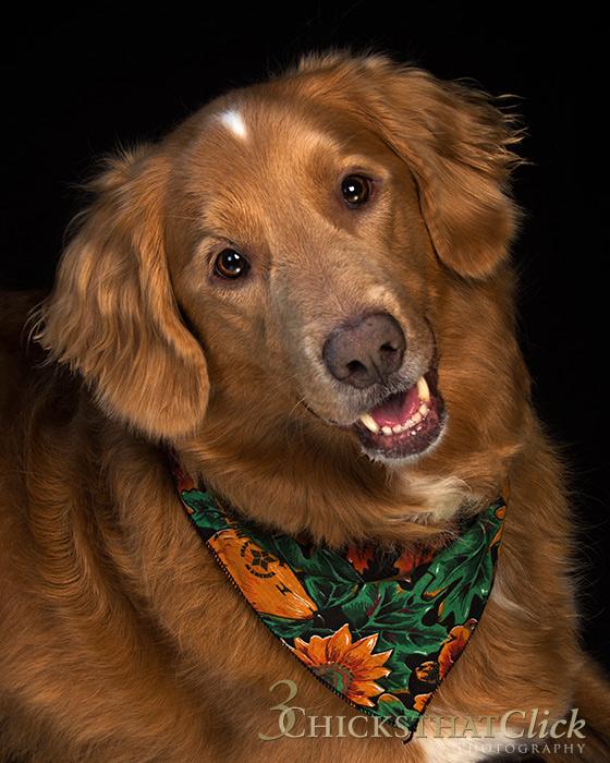 Photo portrait of dog Charley