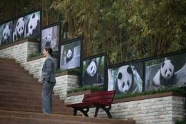 Giant Panda Research Base8