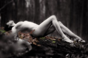 forest_10