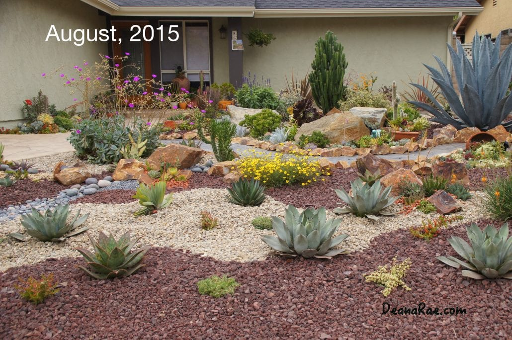 Ten Succulent Front Yard Essentials