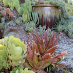 Showcase Succulents In Large Pots Debra Lee Baldwin