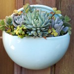 150 Ideas For Pots Of Rosette Succulents Debra Lee Baldwin