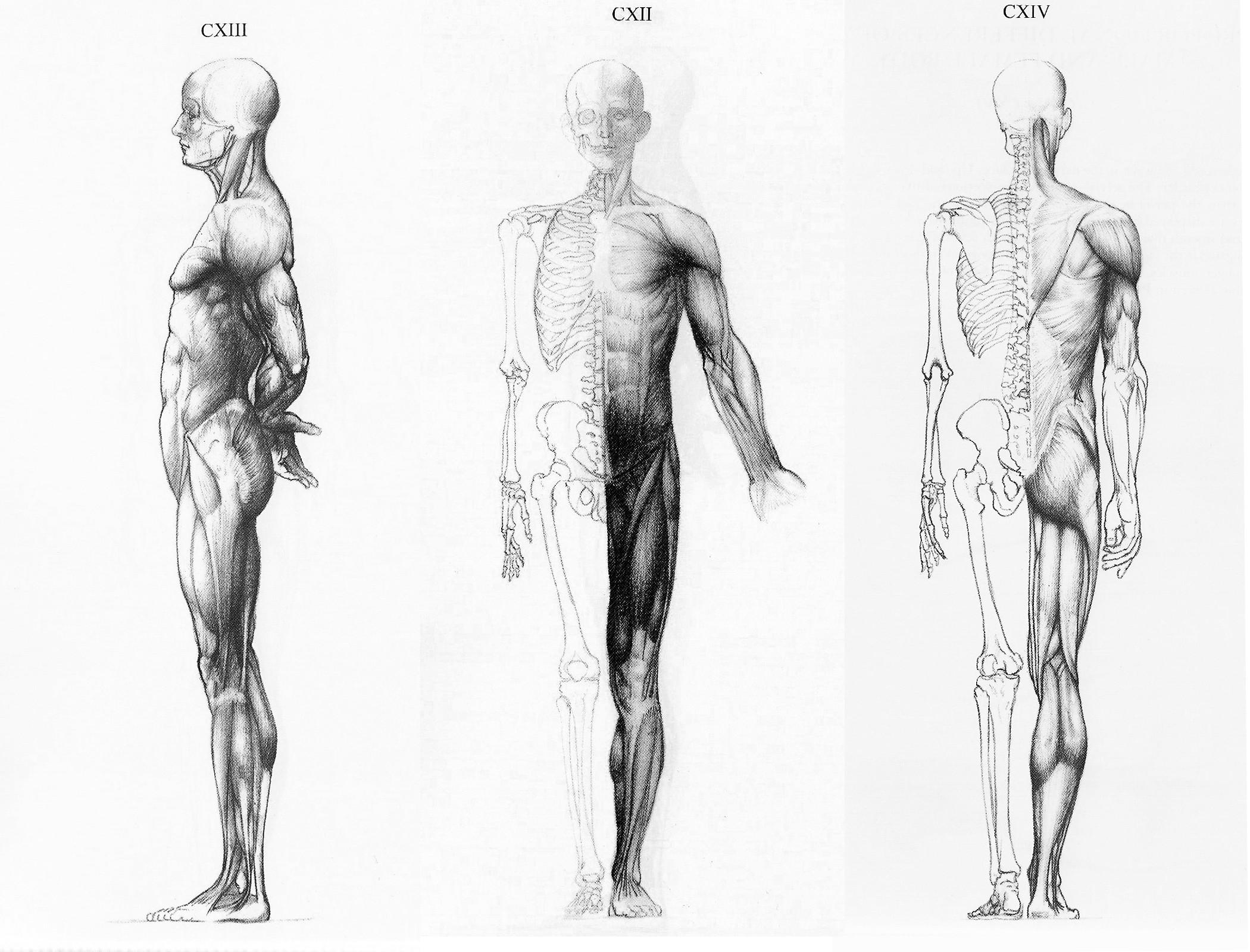 3d Anatomical Model For Educational Purpose 3danatomymsp