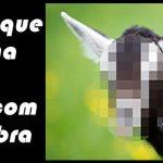 sexo na cabra