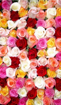 Colorful Roses Wallpaper iPhone - 2018 iPhone Wallpapers