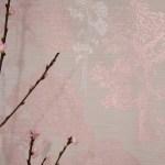 Iphone 7 Wallpaper Rose Gold Themes 2020 3d Iphone Wallpaper