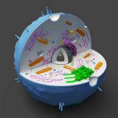 3d Animal Cell Diagram 99 Civic Ignition Wiring Model Models World