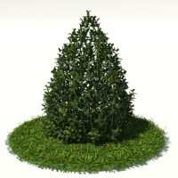 Buxus Plant Cone Shape 3D Model - Realtime