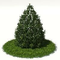Buxus Plant Cone Shape 3D Model - Realtime
