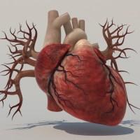 Human Heart 3D Model - Realtime