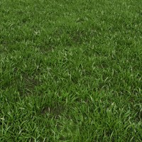 Grass Plant 3D Model - Realtime
