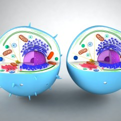3d Animal Cell Diagram Electrical Residential Wiring Diagrams Model Models World