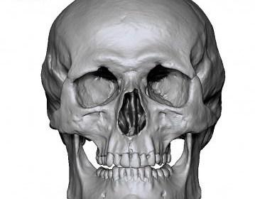 Free Male Skull 3D scan Ten21