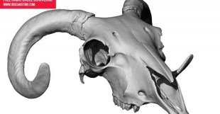 FREE 3D RAM SKULL DOWNLOAD