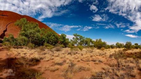 Przyroda ustóp Uluru