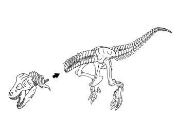 You Can Now 3D Print Your Own 79 Piece T-Rex Skeleton