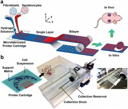 PrintAlive 3D Bioprinter Creates Skinlike Living