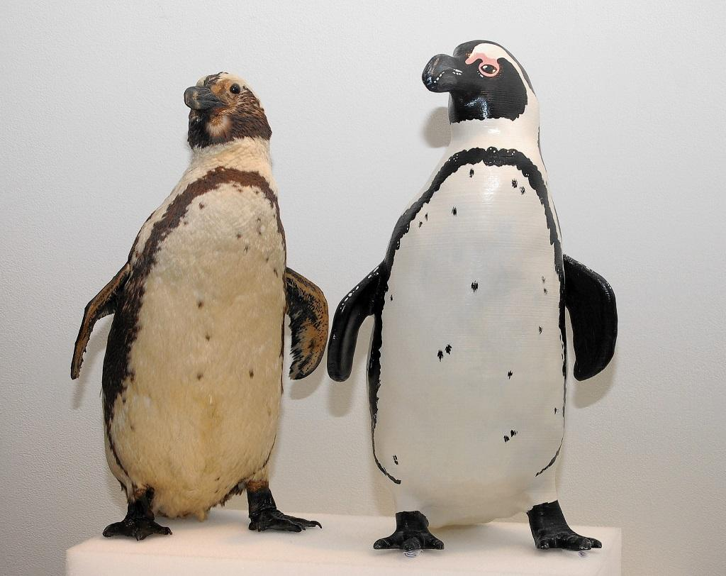 See the BlackFooted Penguin in 3D Print as the Bruce