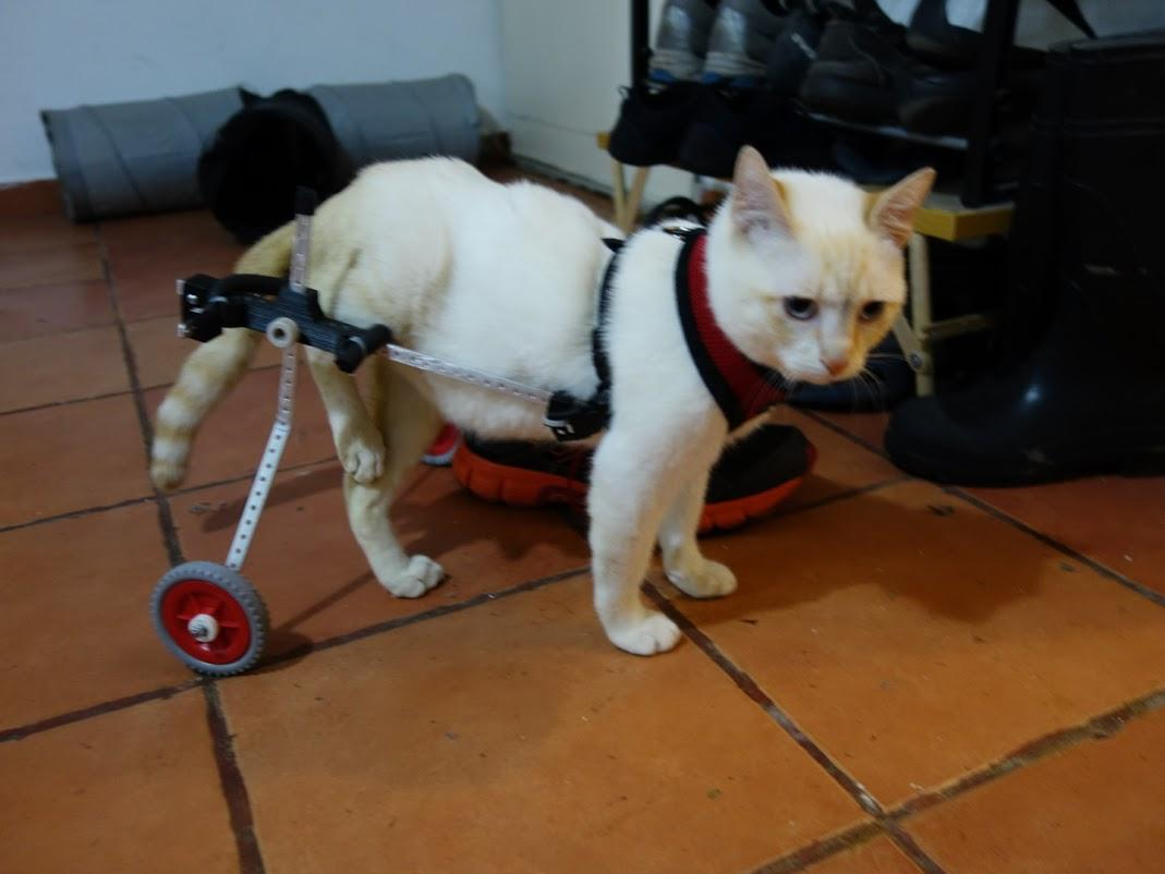wheelchair for cats armrest cushion office chair paralyzed kitten walks again thanks to a 3d printed he began modeling multiple parts which could be combined with 1cm and 3cm aluminum bars ultimately create working